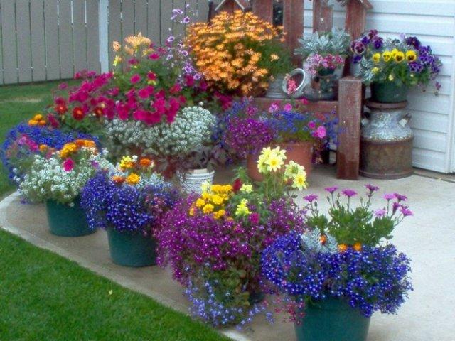 Цветы прекрасно впишутся в дизайн двора частного дома - фото в горшках 1